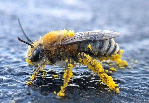 Pollinators I — Center for Pollinator Research — Penn State University