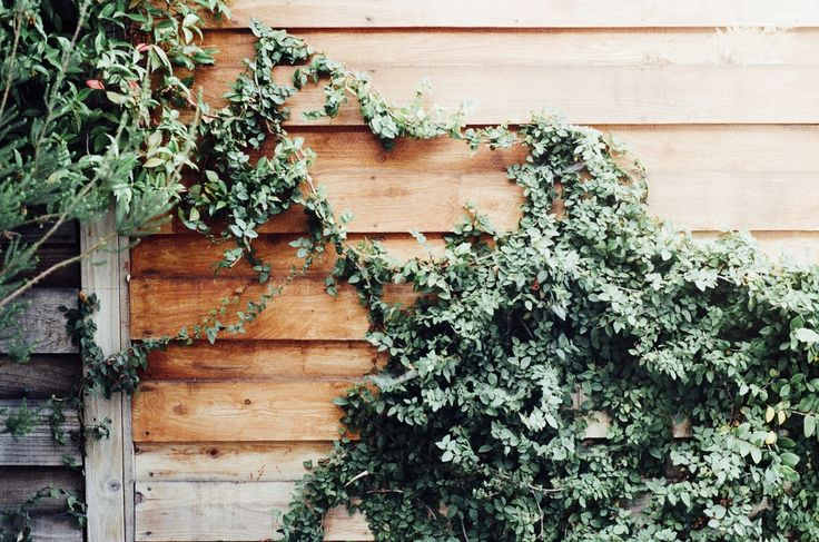 Root Cause: I Just Got Poison Ivy All Over My...