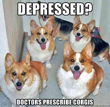 Depressed? Doctors prescribe corgis.