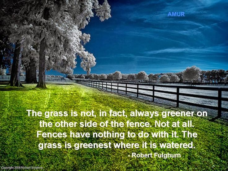 Grass Is Always Greener Quotes: 93 Best Images About Funny Quotes About Love