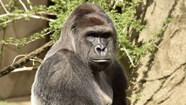 The Cincinnati Zoo was open Sunday for Memorial Day weekend tourists, but the gorilla exhibit was closed indefinitely after authorities killed a gorilla that attacked a 4-year-old boy who fell into the enclosure's moat.