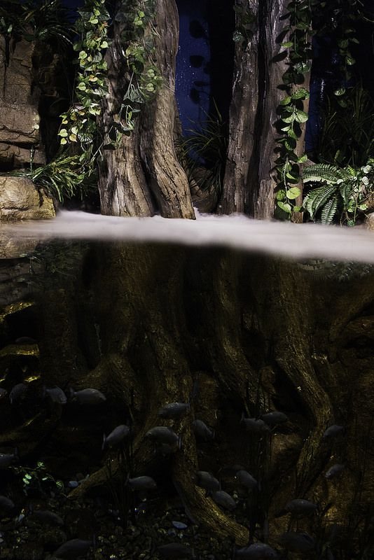 A taste of the Amazon jungle at night :)  http://www.mattmacdonaldphoto.com