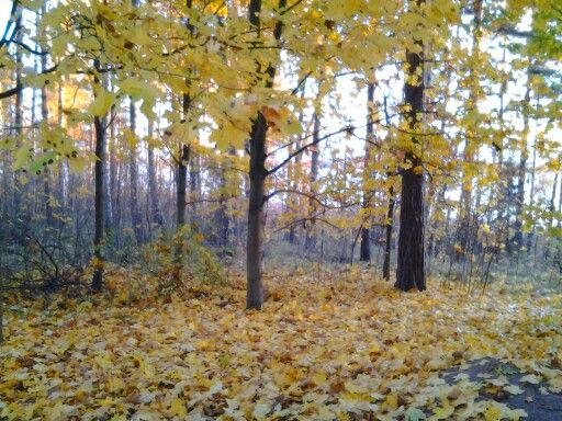 In autumn at Tarvaspää