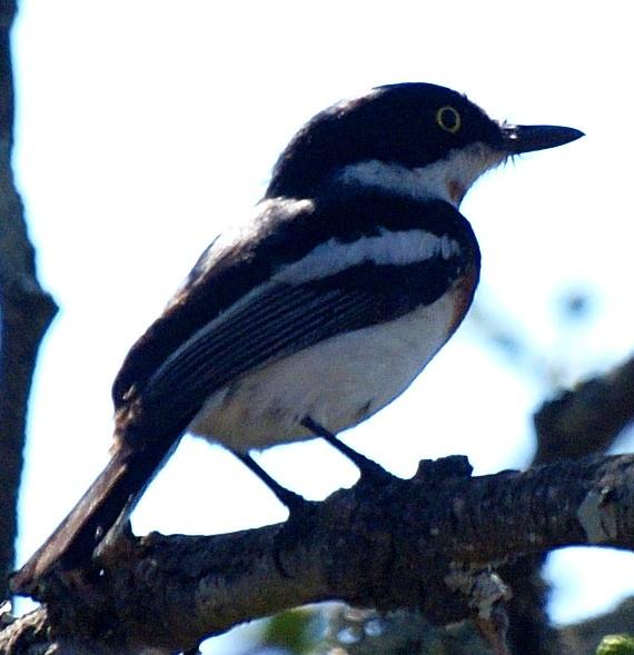 Black and white bird on African Safari