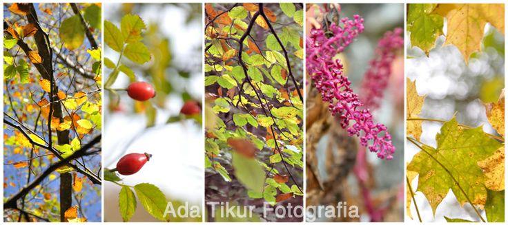Los colores de las hojas en Otoño (adatikur.com).