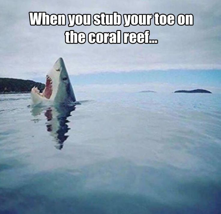 25+ best ideas about Shark jokes on Pinterest | Funny ...