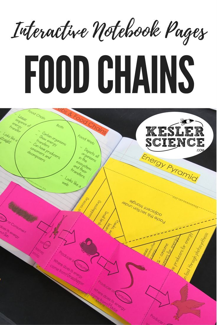 Compare and contrast food webs and food chains with a venn diagram graphic organizer. Identify organism relationships (producer, consumer) and energy transformations with this ecosystems food chain foldable worksheet. Turn science notebooks into a fun, interactive, hands-on learning experience for your upper elementary or middle school students! Grades 4th 5th 6th 7th 8th