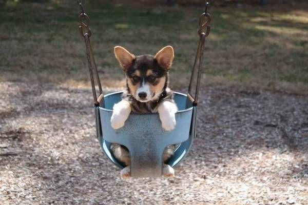 miradas conmovedoras de perros 11