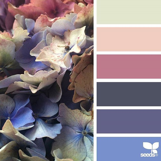 today's inspiration image for { flora spectrum } is by @74larali ... thank you, Lara, for sharing your wonderful photo in #SeedsColor !