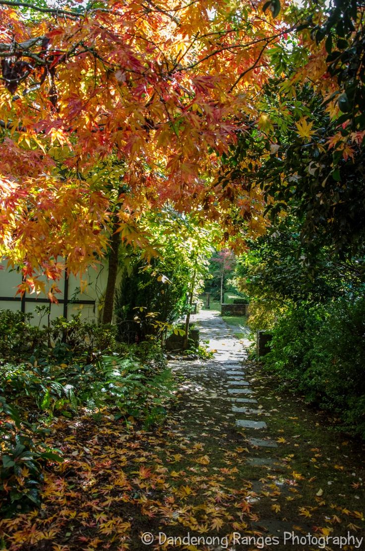 Loving the autumn colours at this beautiful Edna Walling garden. And all the pathways criss crossing across the 3 acre property. Just a joy to walk along.