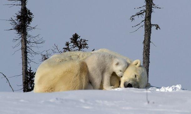 Love polar bears :)