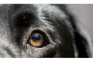 Home Remedy to Cure an Eye Infection in a Dog | eHow