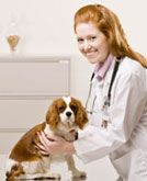 Veterinary Tech Salary and Benefits:       Learn about the salary and benefits within a veterinary technician career.
