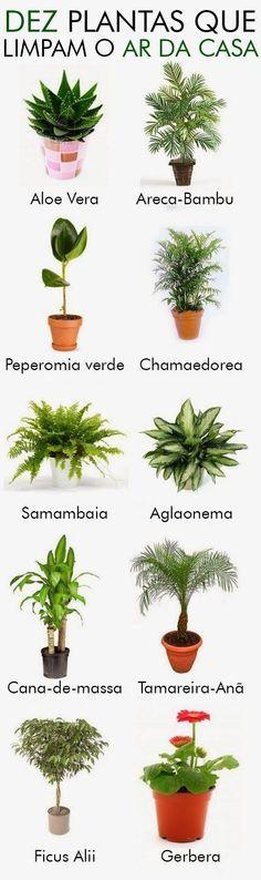 10 Plantas que limpam o ar da casa…