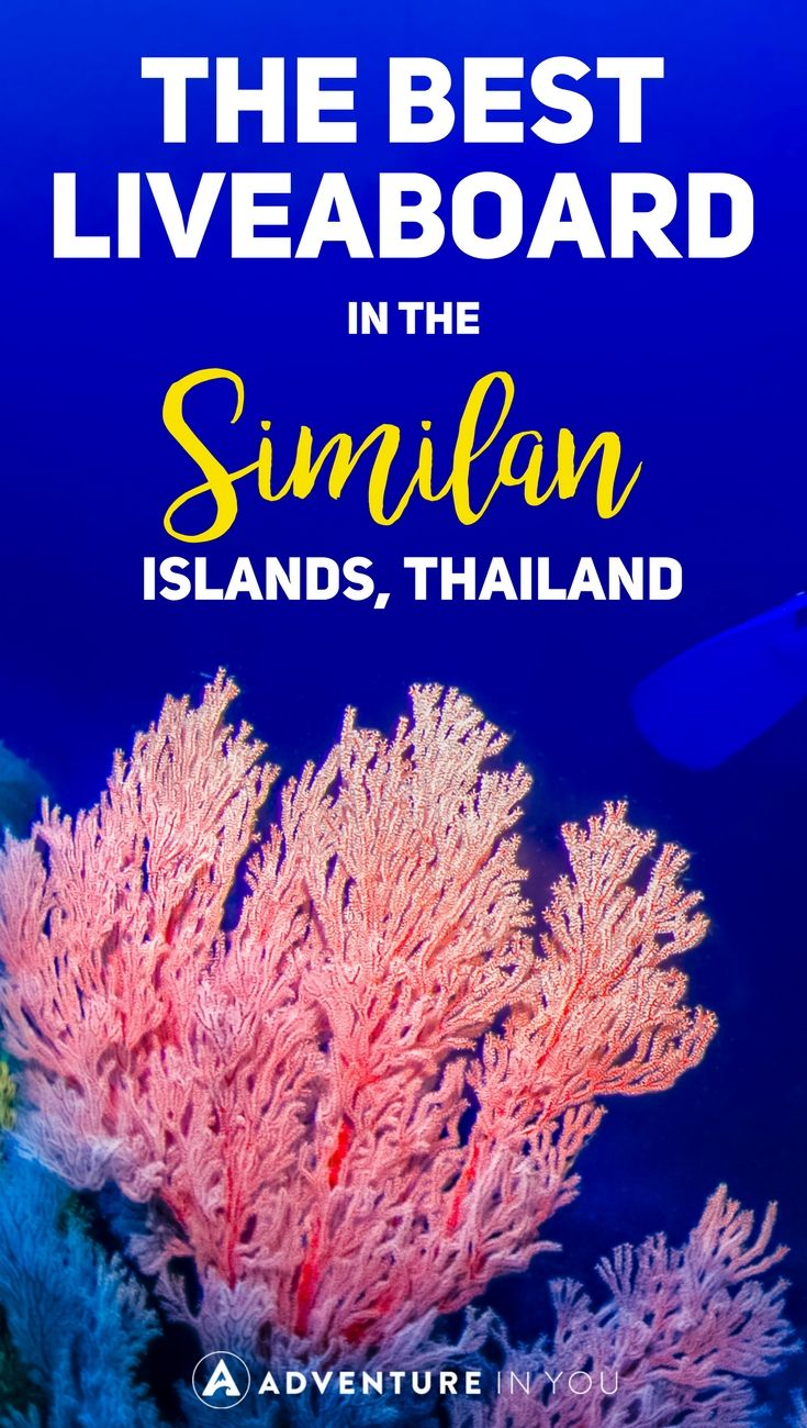 Similan Island | Thinking about diving in the Similan Islands in Thailand? Here are our top picks for the best liveaboard options in Similan. #similanislands #diving #thailand