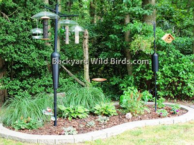 Backyard Wild Birds - Blog: Backyard Landscaping Ideas