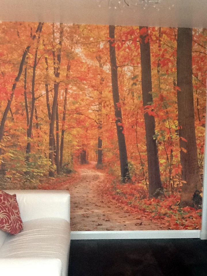 1000 ideas about forest wallpaper on pinterest for Autumn forest 216 wall mural
