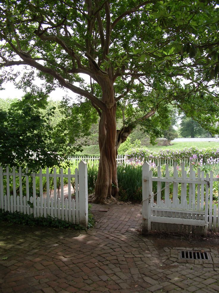 1000 ideas about picket fence garden on pinterest for Colonial fence designs