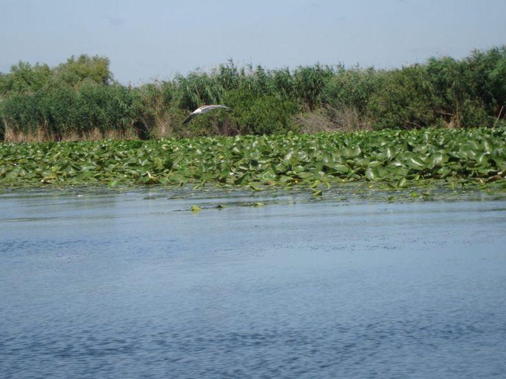 Unexplored place-Danube Delta