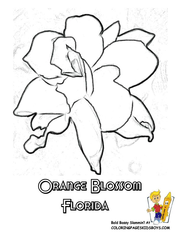 free flower coloring sheets of us states alabama georgia flower coloring pages for official flowers symbols of alabama camellia alaska forget me not