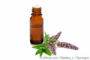 How to Use Catnip Oil for a Healthier You  March 02, 2017
