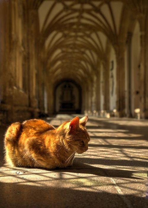 megamisterb:   Le chat du jour