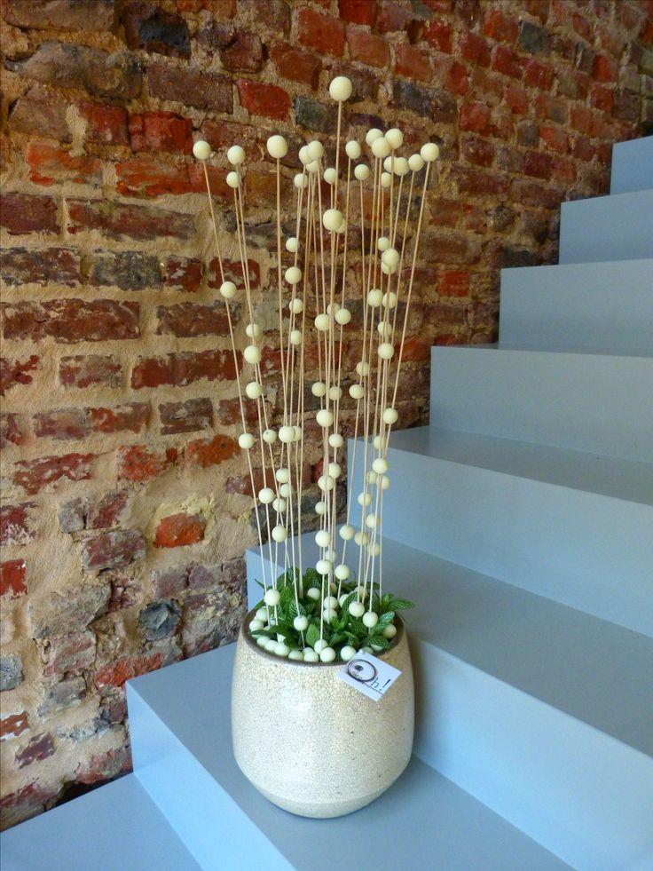 20 best Abonnement images on Pinterest Plants, Bulbs and Container - abo mein schoner garten