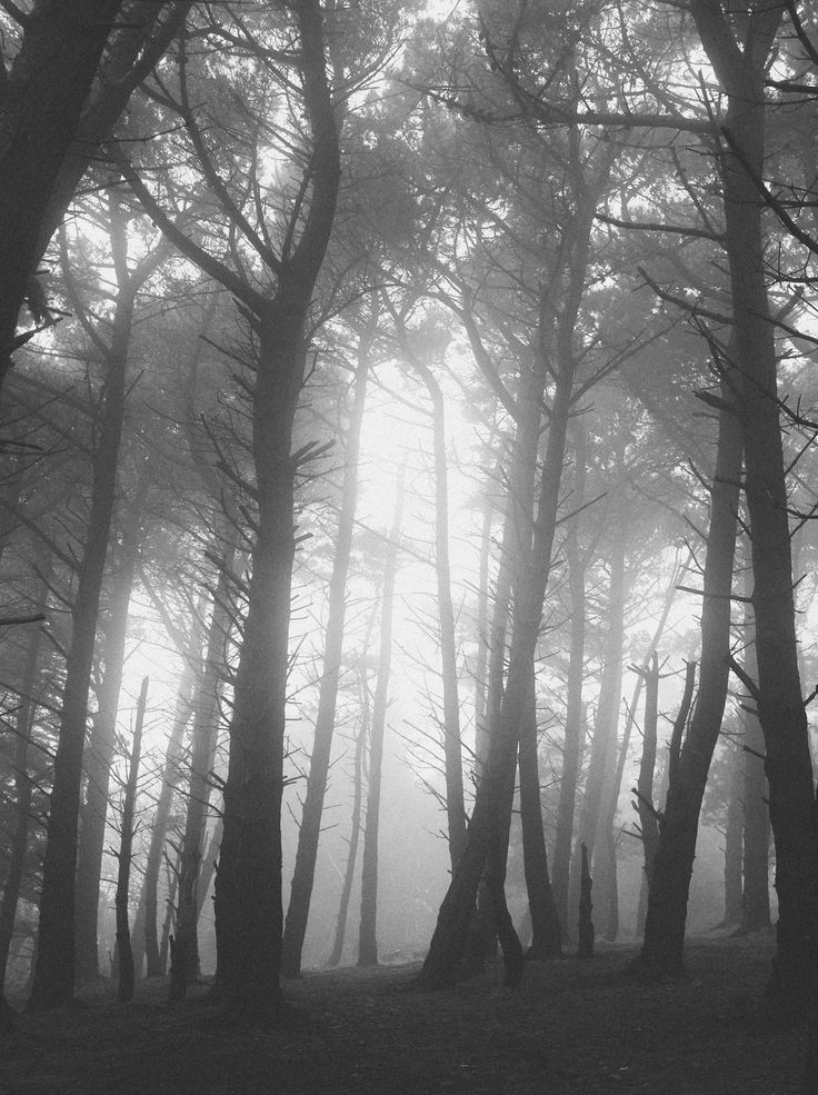 Killiney Hill Mist | by shaymurphy