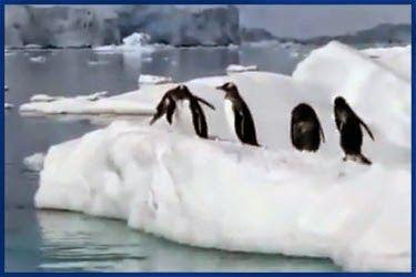 Lustige Tiervideos: Lustiges Pinguin Video 2014