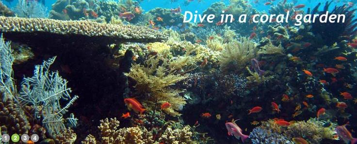 dive in coral garden ...