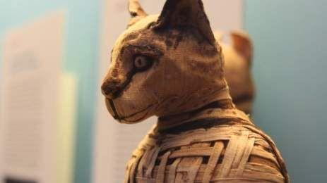 iNotos – Ενημέρωση από την Κρήτη ( Πώς οι γάτες κατέκτησαν τον κόσμο και… τα πλοία των Βίκινγκς