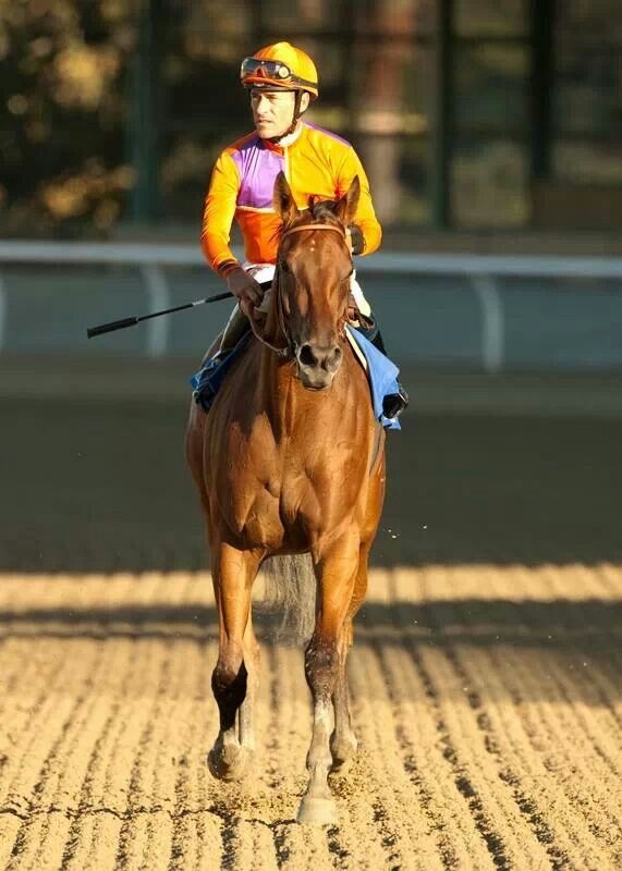 Jockey Gary Stevens and his mount Beholder wins the 2013 Zenyatta Stakes