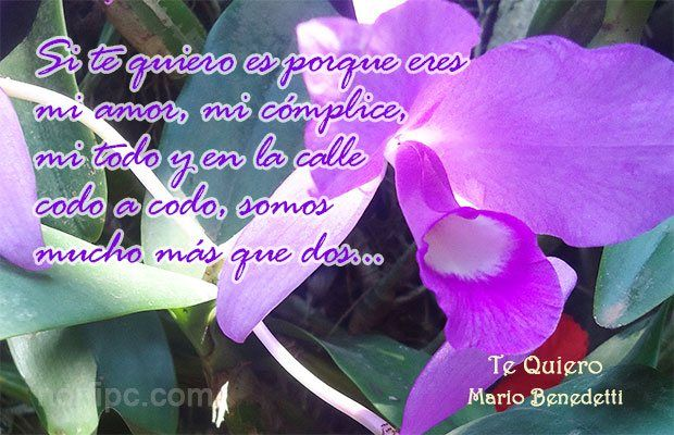 Poema de Mario Benedetti, Te Quiero