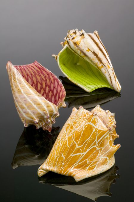 Small Conch Shells by Treg Silkwood and Candice Martin. Glass.