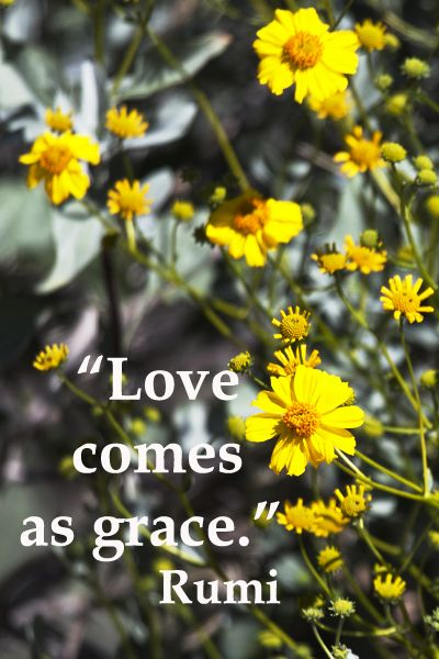 Image result for a state of grace quotes by rumi