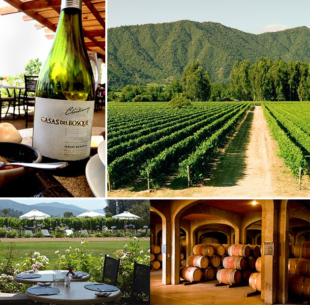 Taking A Day Trip Into Chilean Wine Country | Forbes Startle - March 12, 2013