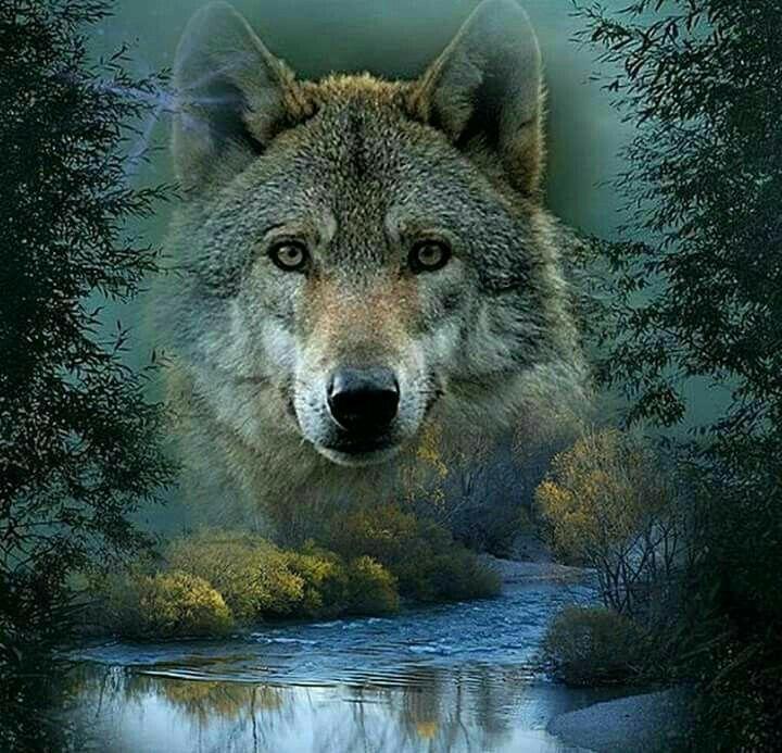 состоит семи волк одиночка фотографии покупайте продавайте авто