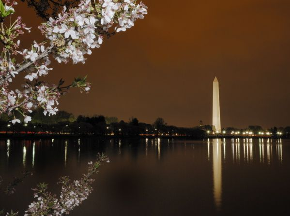 Go go Washington D.C. when the Cherry Blossoms are in bloom. (Attend the National Cherry Blossom Festival.)