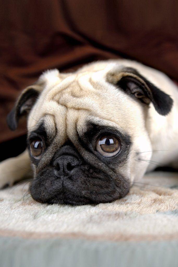Stimmen Sie ab: Ist es okay, einen Hund zu Hause zu haben, obwohl man den ganzen Tag arbeiten muss?