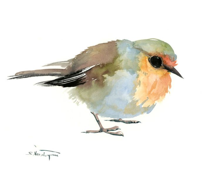 Robin art bird artwork, Original watercolor painting, bird lvoer art, robin painting, watercolor birds by ORIGINALONLY on Etsy
