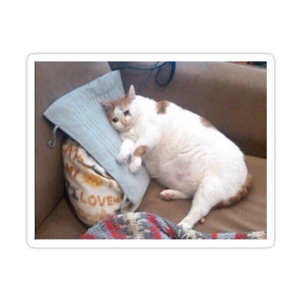Fat Crying Cat Meme