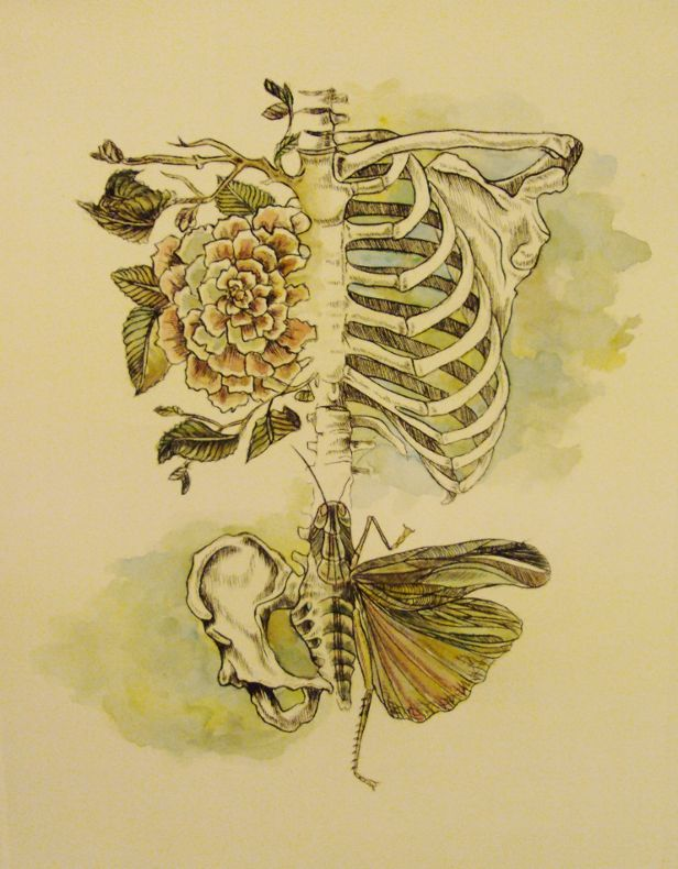 Soft anatomy drypoint and watercolour 2011 rebecca for Grasshopper tattoo supply