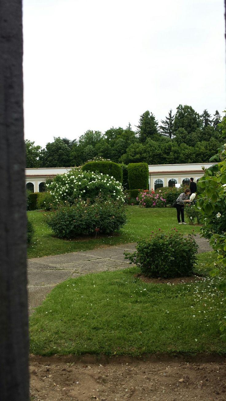 Roseto Villa Reale nel parco di Monza.