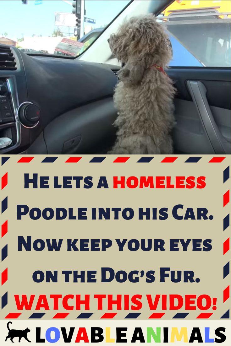 Homeless Puppies Dog Dogs Puppy Dog Cute Love Pug Pugs