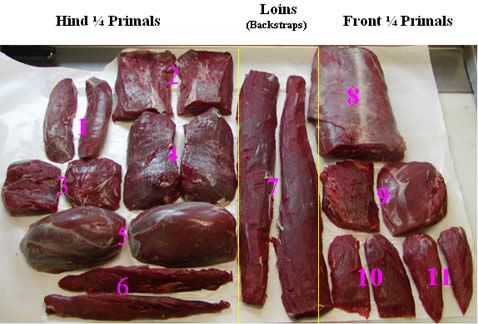 Venison cuts illustrated. Cooking from Wild to Mild: a good intro and tips to cooking elk and venison.