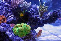 Reef Aquarium setup guide