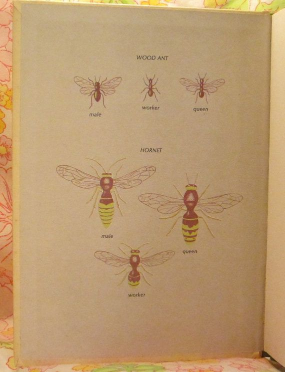 Insects That Live Together Starting Point Library - Michael W. Dempsey and Angela Sheehan - 1970 - Vintage Book
