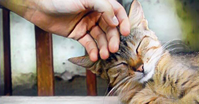 ¿Por qué a los gatos les gusta que los acariciemos?
