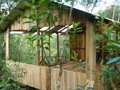 Yoga Treehouse
