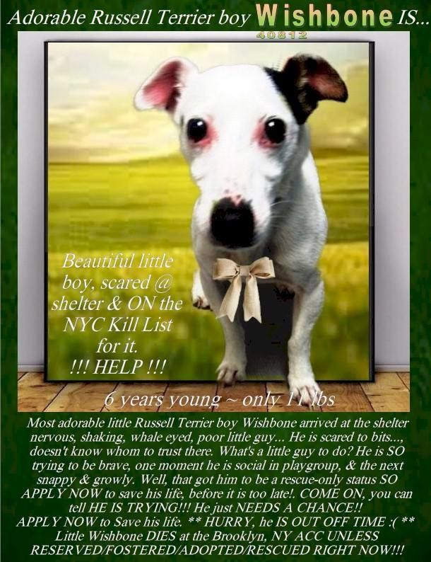 Image May Contain One Or More People Dog And Text Nyc Dogs